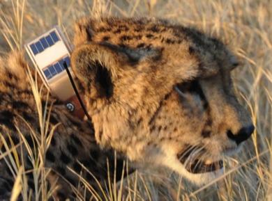 Locate Locomotion Hunting And Habitat Utilisation Among