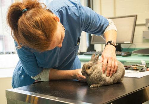 Beaumont Sainsbury Animal Hospital - Royal Veterinary College, RVC