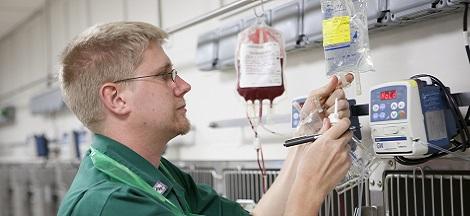 RVC - The Veterinary Nursing Role